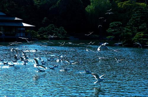 kiyosumi-garden-9.jpg